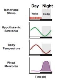wakesleep
